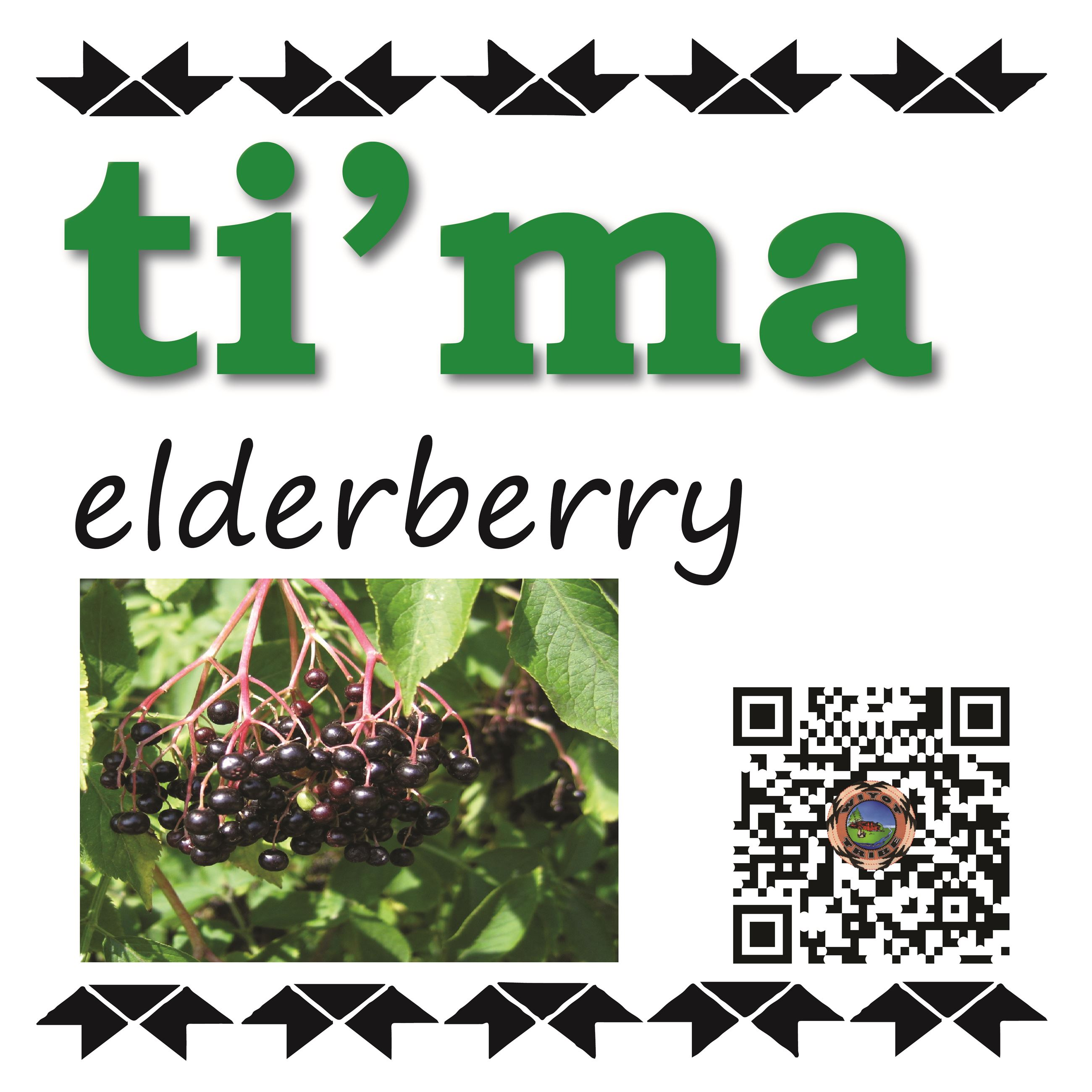 ti'ma (elderberry)